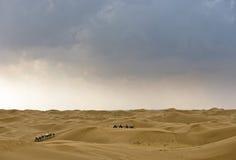 Kamel och öken med den molniga skyen Arkivbild