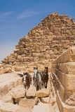 Kamel och Giza pyramider Royaltyfri Fotografi
