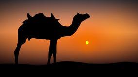 Kamel på solnedgångillustrationen vektor illustrationer