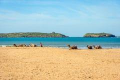 Kamel på stranden i Essaouira Royaltyfria Bilder