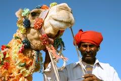 Kamel på safari Arkivbilder