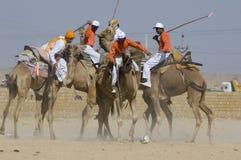 Kamel-Polo 2 Stockfoto