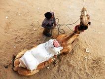 Kamel in Pushkar lizenzfreie stockfotos