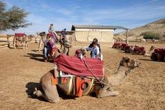 Kamel-Reiten an der Negev-Kamel-Ranch stockbild