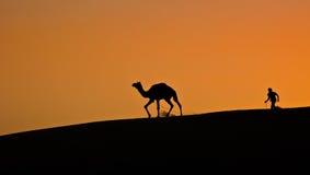 Kamel-sand-dyn-öken Arkivfoto