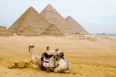 Kamel som framme sitter av pyramiderna Arkivbilder