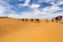Kamel som går till och med öknen Arkivfoto