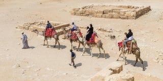 Kamel som tvingas till transportsträckaturister i Egypten med ingen lättnad royaltyfri foto