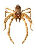 Kamel-Spinne stock abbildung