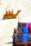 Kamel und bunte Schals Stockfotografie
