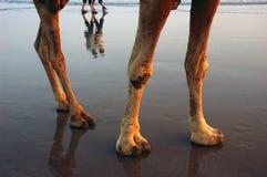 Kamel und Leute auf dem Strand Lizenzfreies Stockfoto