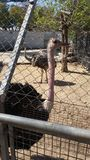 Kamel-Vogel Lizenzfreies Stockbild