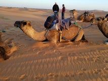 Kamel-Wanderung Sahara lizenzfreies stockfoto