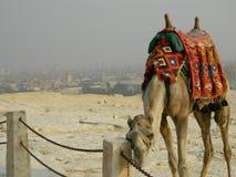 Kamel wird auf dem Hintergrund von Kairo gebunden stockbild