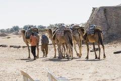 Kamel-Wohnwagen in der Sahara-Wüste Lizenzfreie Stockbilder