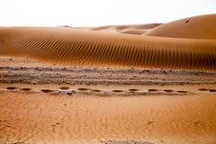 Kamelabdrücke und -wind schufen Muster in den Sanddünen von Liwa-Oase, Vereinigte Arabische Emirate stockbilder