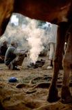Kamelaffärsmän som är satta runt om glöden av en brand på skymning, Pushkar Mela, Rajasthan, Indien arkivbild
