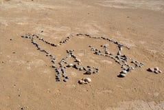 Kamelauslegung in Marokko Stockbilder