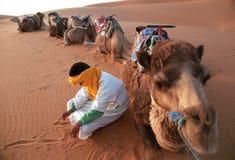 kamelchaufför royaltyfri fotografi