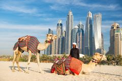 Kamele auf Wolkenkratzerhintergrund am Strand Strandart Jachthafens JBR UAE Dubai: Kamele und Wolkenkratzer stockfotografie