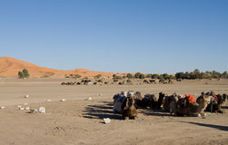 Kamele bei Sahara Lizenzfreies Stockfoto