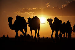 Kamele in der Sahara-Wüste lizenzfreies stockbild