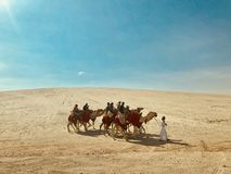 Kamele in der Wüste lizenzfreie stockfotos