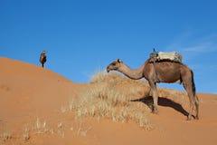 Kamele in der Wüste Sahara Lizenzfreie Stockfotografie