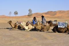 Kamele, die April 16.2012 stillstehen Lizenzfreie Stockfotografie