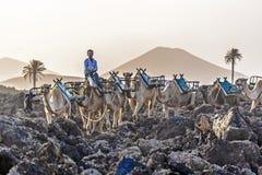 Kamele im Sonnenuntergang Lizenzfreie Stockbilder