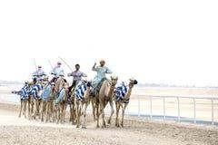 Kamele im Unebenheitsal Khali Desert am leeren Viertel, in Abu Dhabi Stockfoto