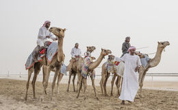 Kamele im Unebenheitsal Khali Desert am leeren Viertel, in Abu Dhabi Stockfotografie