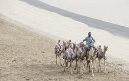 Kamele im Unebenheitsal Khali Desert am leeren Viertel, in Abu Dhabi Lizenzfreie Stockbilder