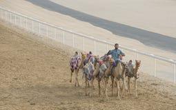 Kamele im Unebenheitsal Khali Desert am leeren Viertel, in Abu Dhabi Lizenzfreies Stockfoto