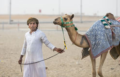 Kamele im Unebenheitsal Khali Desert am leeren Viertel, in Abu Dhabi Stockfotos
