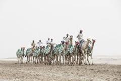 Kamele im Unebenheitsal Khali Desert am leeren Viertel, in Abu Dhabi Lizenzfreie Stockfotografie