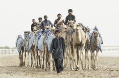 Kamele im Unebenheitsal Khali Desert am leeren Viertel, in Abu Dhabi Lizenzfreie Stockfotos