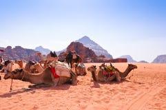 Kamele im Wadi-Rum Lizenzfreies Stockfoto