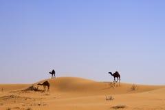 Wüsten-Kamel Stockfoto