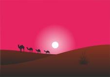 Kamele sind in der Wüste Lizenzfreies Stockfoto