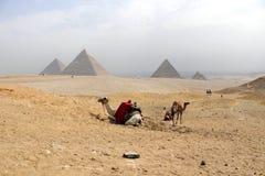 Kamele u. die großen Pyramiden von Giseh im Hintergrund im Sah lizenzfreies stockbild