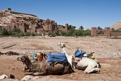 Kamele und Kasbah Lizenzfreie Stockfotos