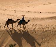 Kamelen royalty-vrije stock fotografie