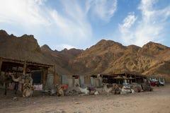 Kamelen, Blauw Gat, Dahab stock foto's