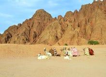 Kamelen in de Egyptische woestijn Royalty-vrije Stock Foto's