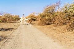 Kamelen in de Soedan Stock Fotografie