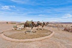 Kamelen dichtbij AIT Ben Haddou, Marokko Royalty-vrije Stock Foto's