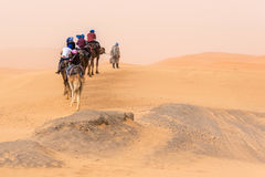 Kamelen die in de woestijn lopen Stock Foto's
