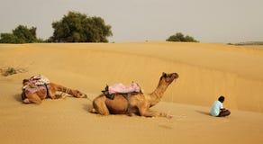 Kamelen en gids Stock Foto's