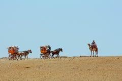 Kamelen en Paard en karren Royalty-vrije Stock Foto